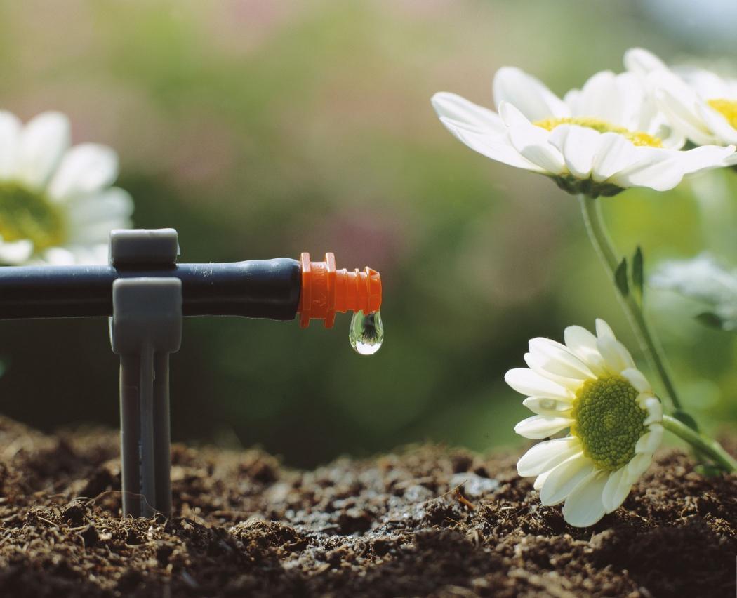 Капельный полив – когда урожай в радость!