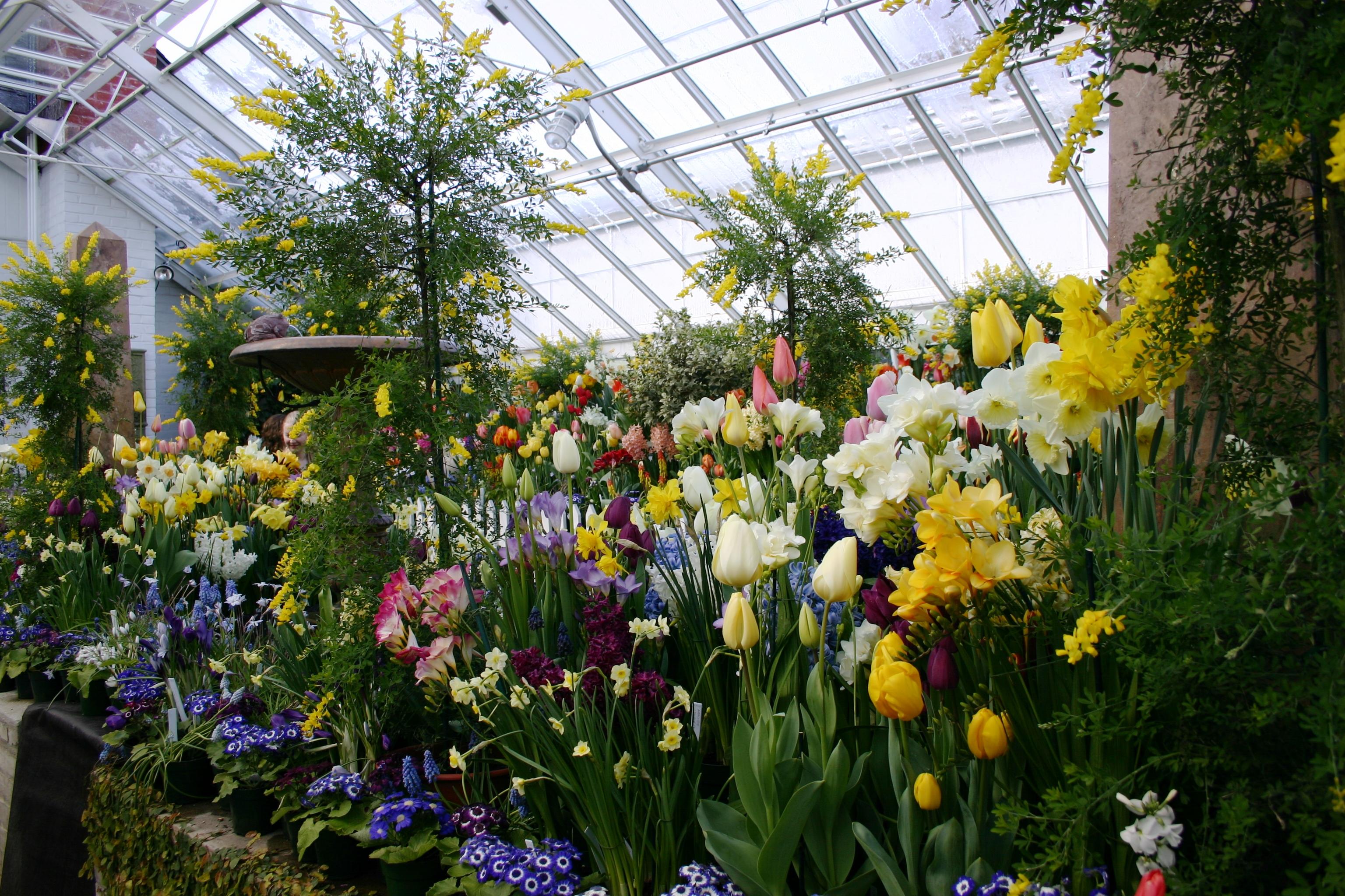 Красивый бизнес: особенности выращивания цветов в теплице!