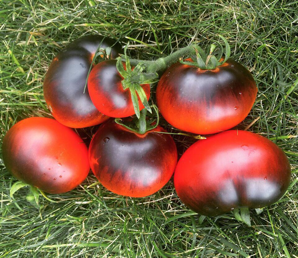 Таких томатов в теплице Вы еще не видели!