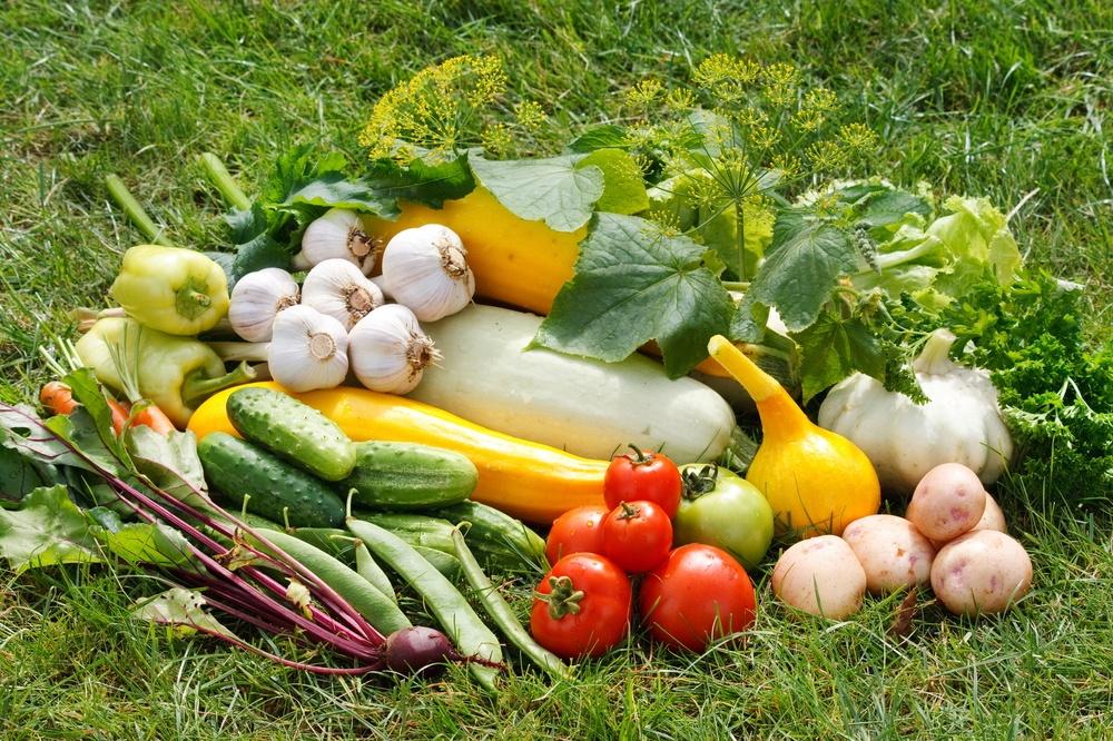 Как получить богатый урожай и правильно собрать его?